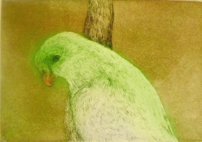 27. Supurb Parrot