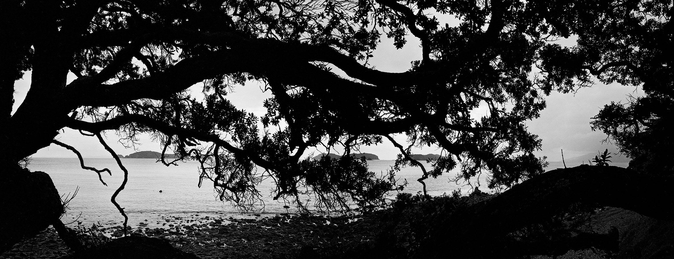 15 Tree Coromandel, NZ. 1994