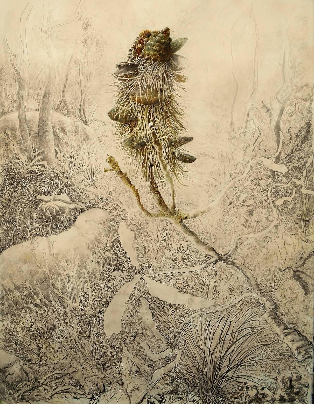 Banksia Serrata 2