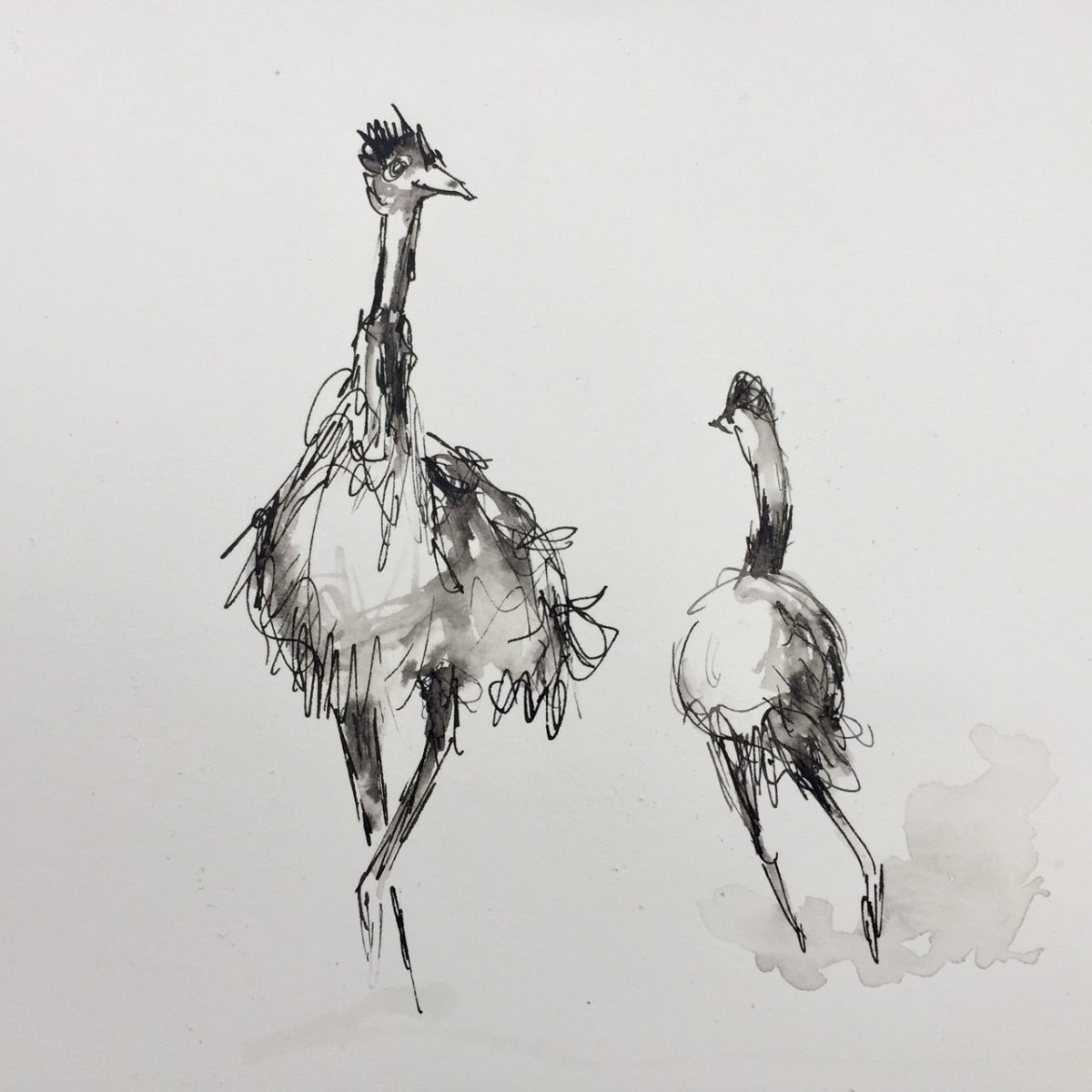 Art Atrium Patrick Shirvington - Emu study 1